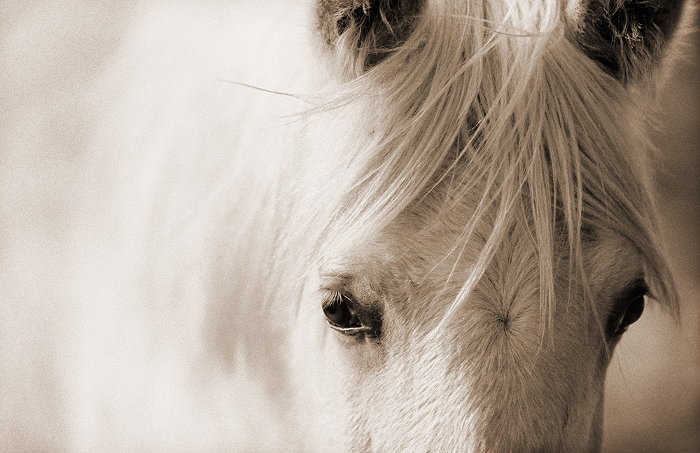 Blanco Mustano limited edition of 20Silver Fiber PrintsHand printed equine fine art photography